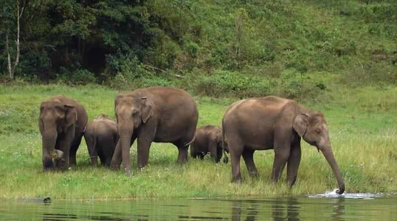 Elephant in Munnar